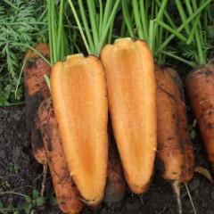 Морковь Каскад F1 /1.000.000 семян (2,2-2,4 мм)/ *Bejo Zaden*