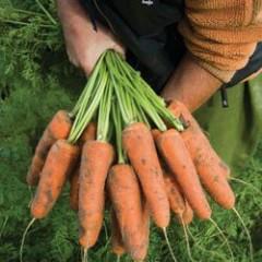 Морковь Кардиф F1 /1.000.000 семян (1,8-2,0 мм)/ *Bejo Zaden*