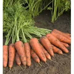 Морковь Купар F1 /1.000.000 семян (1,6-1,8 мм)/ *Bejo Zaden*