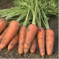 Морковь Купар F1 /1.000.000 семян (2,0-2,2 мм)/ *Bejo Zaden*