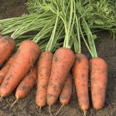 Морковь Купар F1 /1.000.000 семян (2,2-2,4 мм)/ *Bejo Zaden*