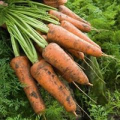 Морковь Кордоба F1 /1.000.000 семян (2,0-2,2 мм)/ *Bejo Zaden*