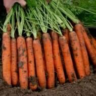 Морковь Наполи F1 /1.000.000 семян (2,2-2,4 мм)/ *Bejo Zaden*
