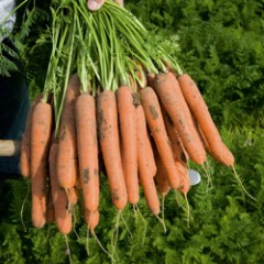 Морковь Нерак F1 /1.000.000 семян (1,6-1,8 мм)/ *Bejo Zaden*