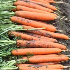Морковь Нерак F1 /1.000.000 семян (2,0-2,2 мм)/ *Bejo Zaden*