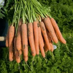 Морковь Нерак F1 /1.000.000 семян (2,2-2,4 мм)/ *Bejo Zaden*