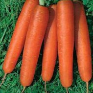 Морковь Камаран F1 /1.000.000 семян (1,6-1,8 мм)/ *Bejo Zaden*