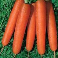 Морковь Камаран F1 /1.000.000 семян (1,8-2,0 мм)/ *Bejo Zaden*