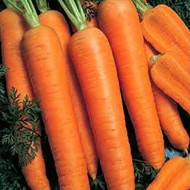 Морковь Камаран F1 /1.000.000 семян (2,0-2,2 мм)/ *Bejo Zaden*