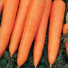 Морковь Камаран F1 /1.000.000 семян (2,2-2,4 мм)/ *Bejo Zaden*