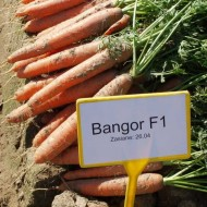 Морковь Бангор F1 /1.000.000 семян (1,6-1,8 мм)/ *Bejo Zaden*