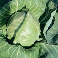 Капуста белокочанная Рейма F1 /2.500 семян/ *Rijk Zwaan*