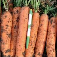Морковь Фидра F1 /1.000.000 семян калибр <1,6мм/ *Rijk Zwaan*