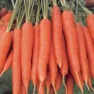 Морковь Магно F1 /1.000.000 семян калибр <1,6мм/ *Rijk Zwaan*