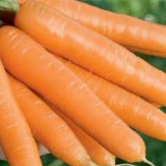 Морковь Магно F1 /25.000 семян калибр >1,6мм/ *Rijk Zwaan*