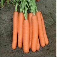 Морковь Морелия F1 /100.000 семян калибр <1,6мм/ *Rijk Zwaan*