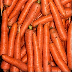 Морковь Морелия F1 /25.000 семян калибр >1,6мм/ *Rijk Zwaan*