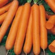 Морковь Рига F1 /1.000.000 семян калибр <1,6мм/ *Rijk Zwaan*