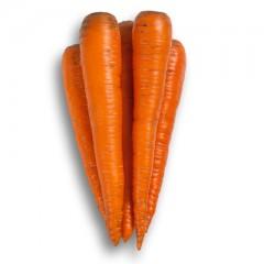Морковь Трафорд F1 /25.000 семян калибр <1,6мм/ *Rijk Zwaan*