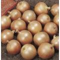 Лук Дэнсити /10 гр/ *Профессиональные семена*