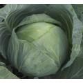 Капуста белокочанная Агрессор F1 /2.500 семян/ *Syngenta*