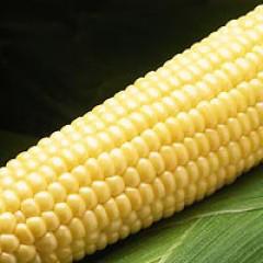 Кукуруза сахарная Бостон F1 /50.000 семян/ *Syngenta*