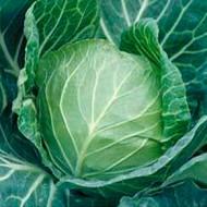Капуста белокочанная Санторино 60 F1 /2.500 семян/ *Syngenta*