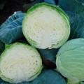 Капуста белокочанная Куизор F1 /2.500 семян/ *Syngenta*