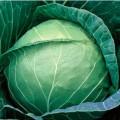 Капуста белокочанная Пруктор Семес F1 /2.500 семян/ *Syngenta*