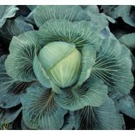 Капуста белокочанная Килатон F1 /2.500 семян/ *Syngenta*