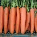 Морковь Дордонь F1 /50.000 семян (1,4-1,6г)/ *Syngenta*