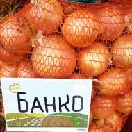 Лук Банко /250.000 семян/ *Syngenta*