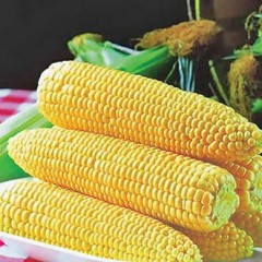 Кукуруза сахарная Спирит F1 /1 кг семян/ *Syngenta*