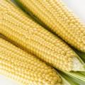 Кукуруза сахарная Спирит F1 /100.000 семян/ *Syngenta*