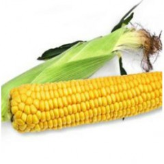 Кукуруза сахарная Старшайн F1 /100.000 семян/ *Syngenta*