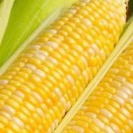 Кукуруза сахарная GSS 1453 F1 /100.000 семян/ *Syngenta*