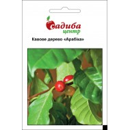 Кофейное дерево Арабика /5 семян/ *Садыба Центр*